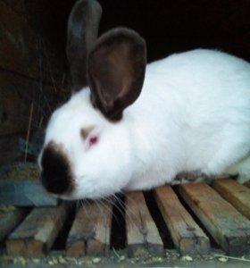 Кролики - 4 породы