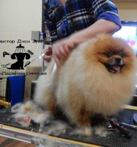Стрижка собак (грумиг, тримминг, выезд на дом)