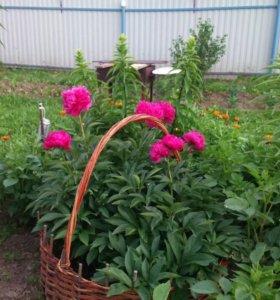 Декоративная клумба для цветов.