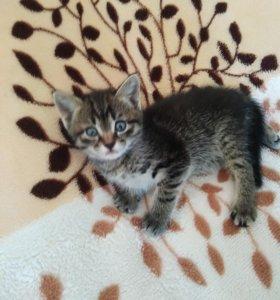 Котята от вислоухой кошки. Бесплатно
