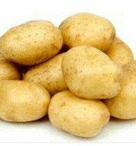 Картофель семянной