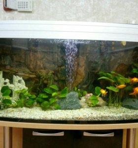 Профессиональный уход за аквариумом