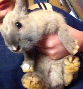 Крольчата!!!