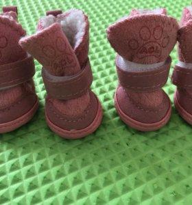 Обувь для маленькой собачки 🐶