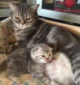 Котята Мягкие комочки ждут вас