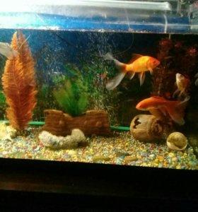 Аквариум с рыбками 250литров