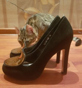 Туфли женские новые, натуральная замша, Италия