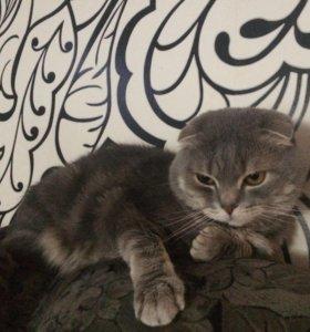 Вязка котика