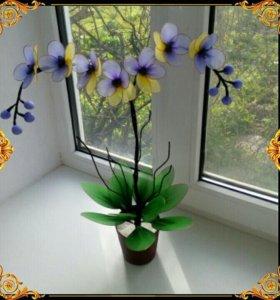 Цветы в наличии