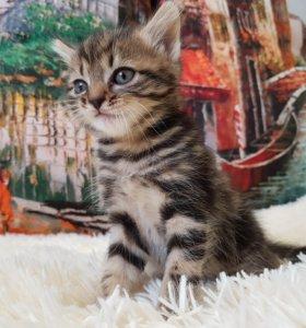 Мраморный котик