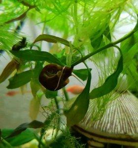 Весь аквариум ( кроме рыб и воды)