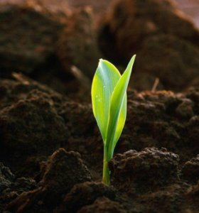Плодородная земля россыпью