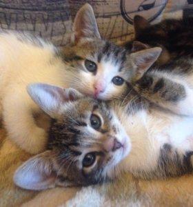 Котята  2 месяца🐱К лотку приучены