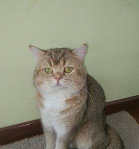 Предлагаю кота на вязку.