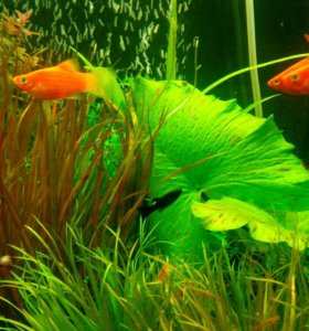 Аквариумные рыбки Аквариумные растения