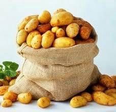 Картошка Андретта, жёлтая.