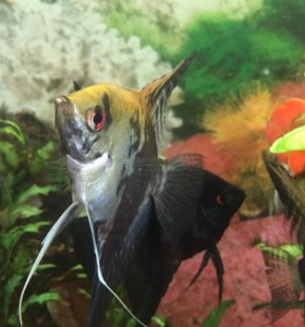 Рыбки+аквариум+оборудование