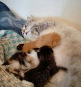 У нас снова родились котята..котята все белые их 6