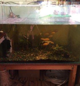 Продаю аквариум 500 литров