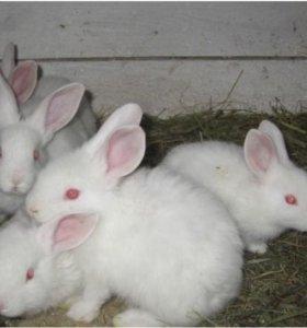 Продам кроликов,