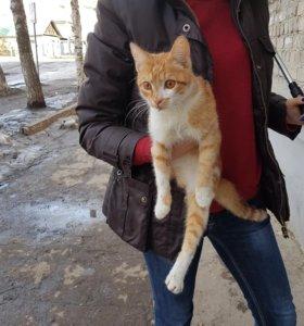 В добрые руки котенок