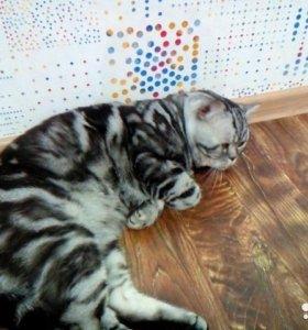 Вязка с мраморным котом