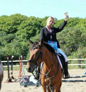 Обучение верховой езде, конный спорт