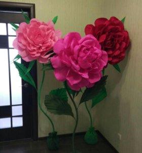 Гигантские ( ростовые ) цветы