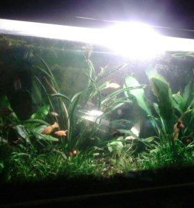 Рыбки,растения,креветки своего разведения