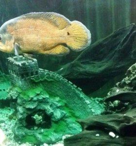продам аквариум 400литров с тумбой