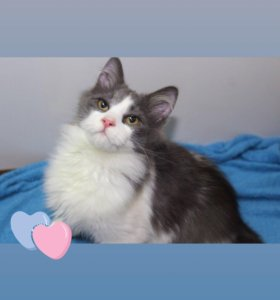 Котенок в добрые руки Пушкин, кот в дар
