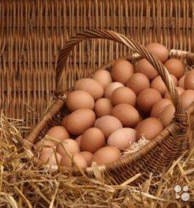Продаю свежее деревенское яйцо