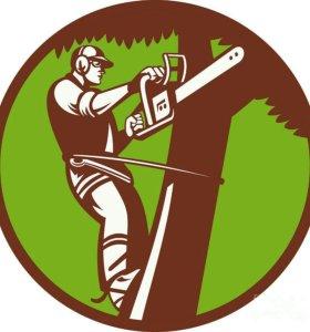 Разработка участков,валка деревьев