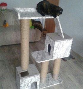 Новый комплекс для кошки