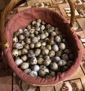 Перепелиные Яйца, в ячейке 20 шт.