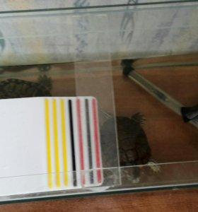 Красноухие черепахи с комплектацией