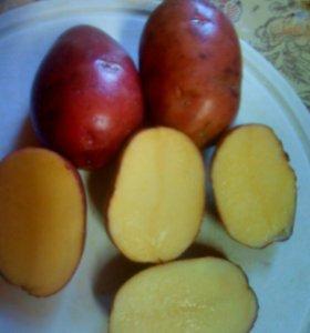 Продам картошка ведро за 200р.ул:ленина,дом107.