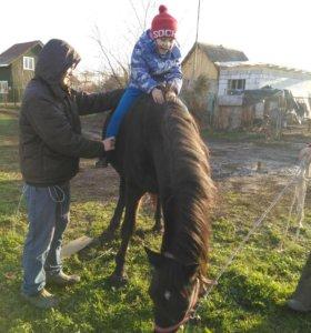 Прокат и индивидуальные занятия на лошадях