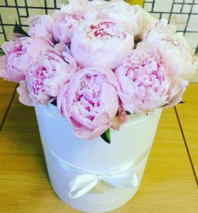 Пионы в коробке нежно розовые спб