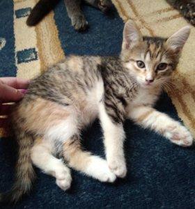 Котёнок(девочка)