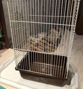 Клетка для грызунов + коробка корма в подарок