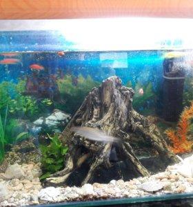 Аквариум 70л +рыбки+фильтр