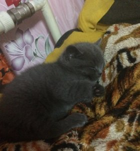 Отдам котёнка в добрые руки.2 месяца.В лоток ходит
