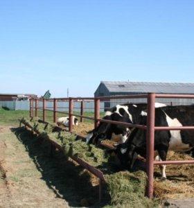 Участок, 106000 сот., фермерское хоз-во