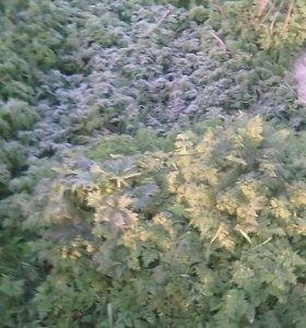 Покос травы и спил деревьев