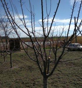 Обрезка и обработка фруктовых деревьев