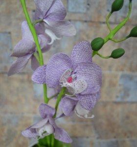 Орхидеи в цветочном горшке