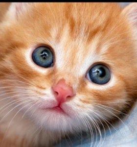 Коты и кошки в добрые руки