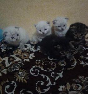Котята 😇