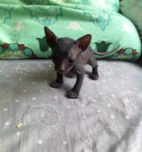 Продам трёх обаятельных котиков и одну кошечку